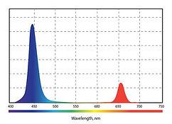 Спектр__07.jpg