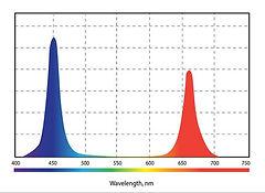 Спектр__06.jpg