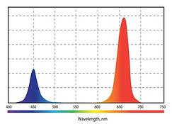 Спектр__01.jpg