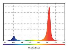 Спектр__03.jpg
