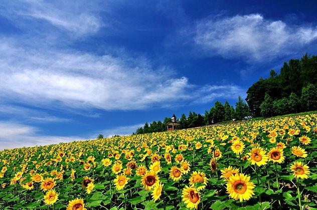 WOW!!!! 16 Taman Bunga di Jepang