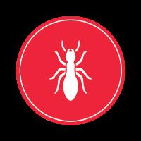 Diagnostic termites ceyeste 13600, diagnostic immobilier 13600 ceyreste
