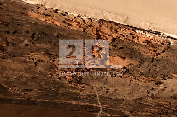 poutre termites.jpg