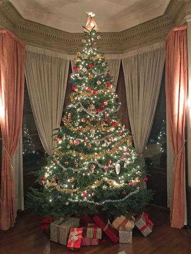Tree in December