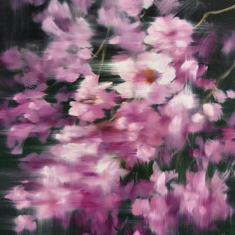 'Magnolias'