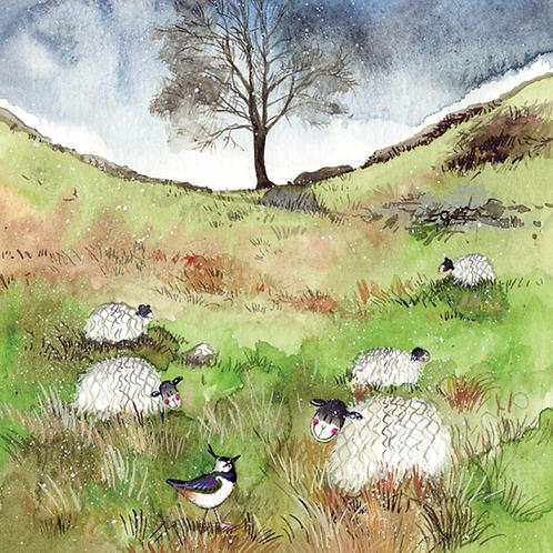 Sheep & Sycamore Blank card