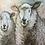 Thumbnail: Companions Sheep Small Chunky Notebook