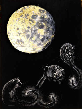 Glis Glis Moonlight, 48x 64 cm