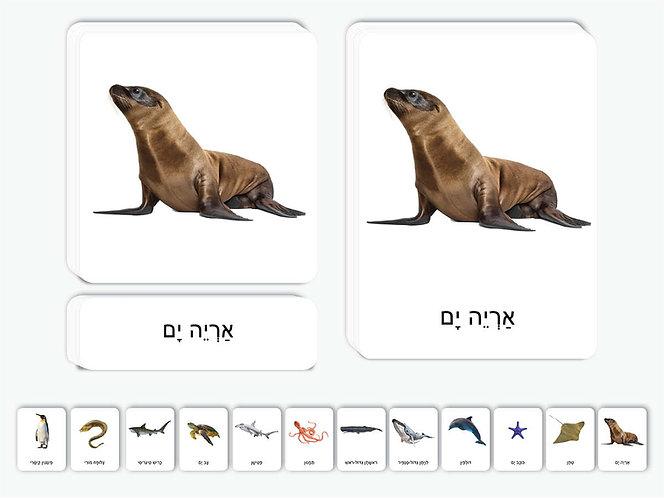 כרטיסיות חיות האוקיינוס