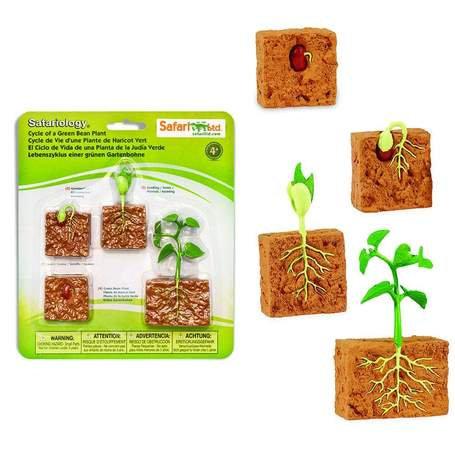 מחזור החיים של צמח