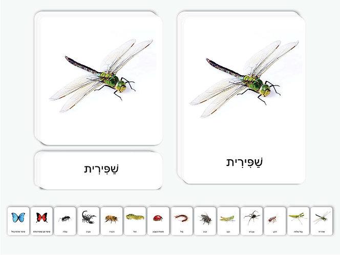 כרטיסיות חרקים