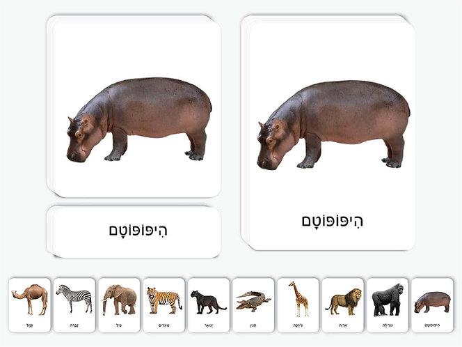 כרטיסיות חיות ספארי
