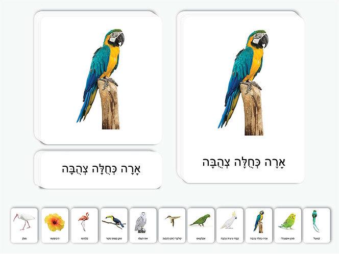 כרטיסיות ציפורים אקזוטיות