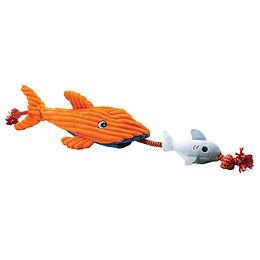 Cordy Catcher Hai