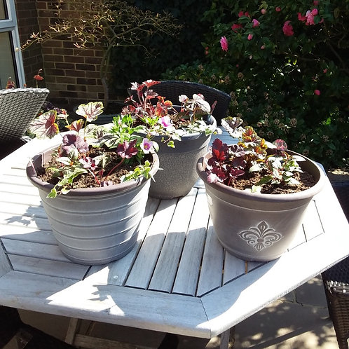 Planted Terrace Pot