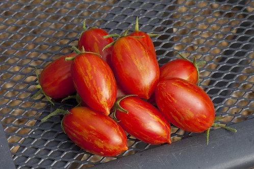 Sunstripe Tomato Plants