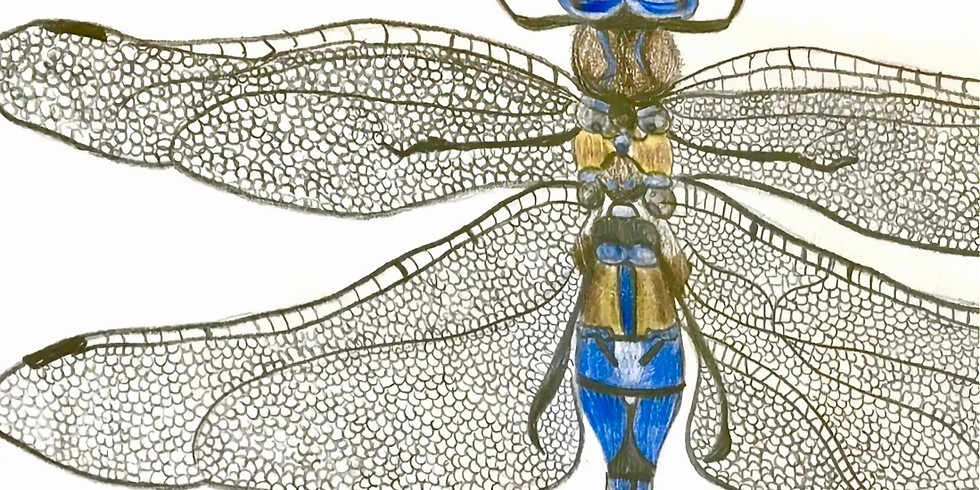 WEEK 9: Scientific Illustration; Insects for Teens, ages 12-17