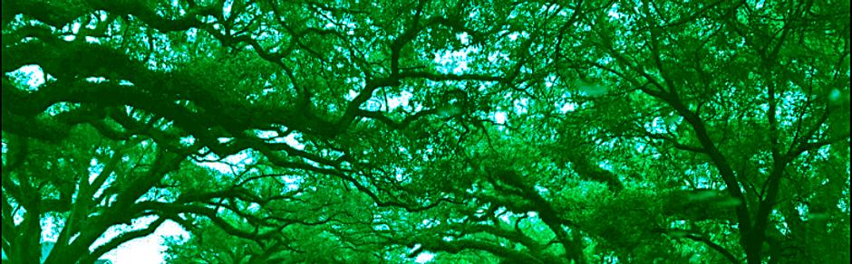 Oak-canopy1_edited_edited.png
