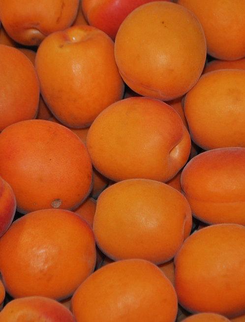 "Abricot ""Magic Cot"""