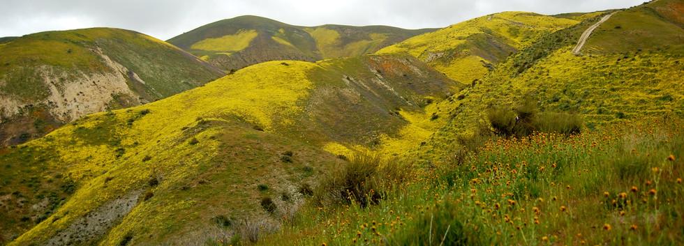 Carrizo Plains