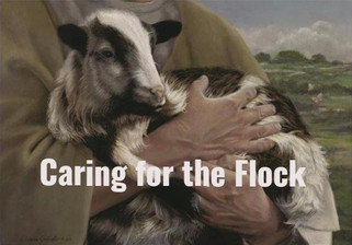 Caring for the Flock