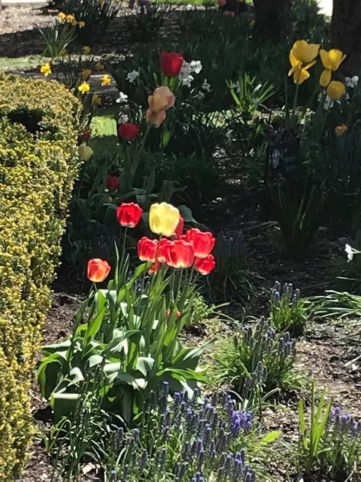Mothers garden -2