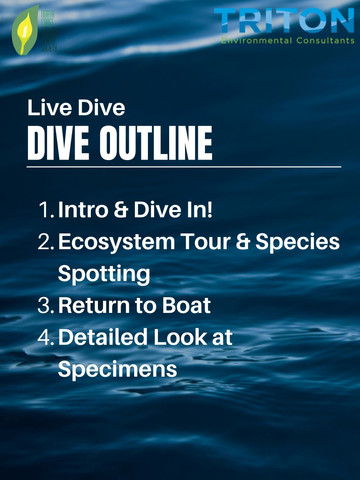 Dive Outline *NEED TO UPDATE.jpg