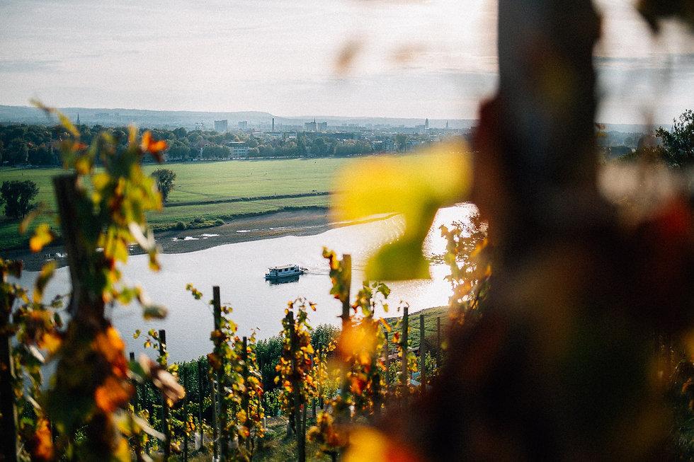 Hochzeit in Dresden am Weinberg - Blick ins Elbtal auf die Altstad vom Lingnerschloss