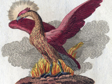 Can the FRC create a Phoenix from Carillion's ashes?
