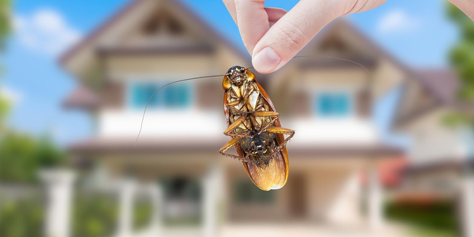 big-river-pest-control-roach-exterminati