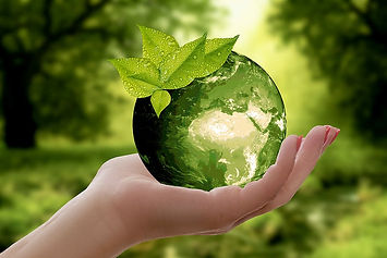 nature-earth-sustainability-leaf.jpg