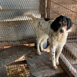 Help Save Yangsan Dogs