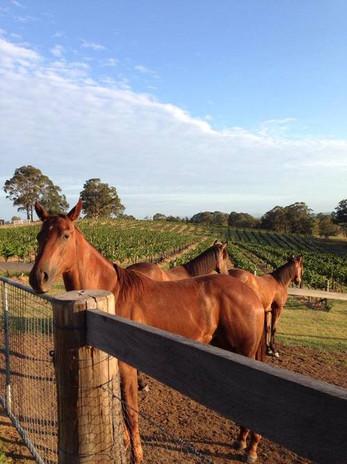 Elbourne-wines-8.jpg