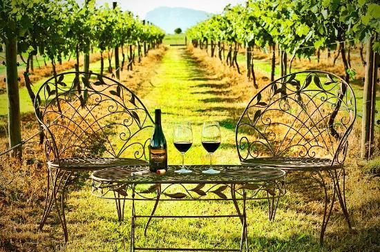 whispering-brook-vineyard.jpg