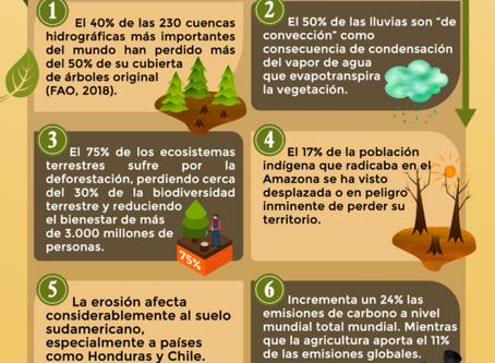 Causas y consecuencias de la deforestación