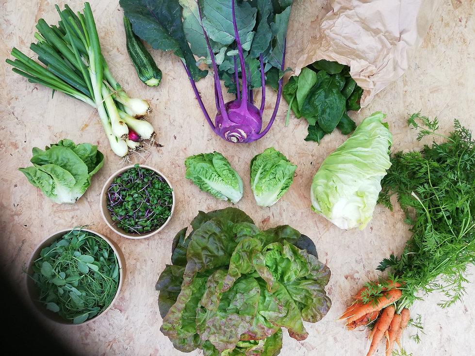 Eksempel på grøntpoe fra Kastanjely