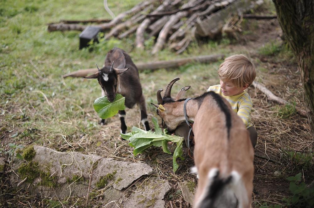Benjamin hygger med en af sine geder. Næste år vil vi måske kunne mælke dem bægge to?