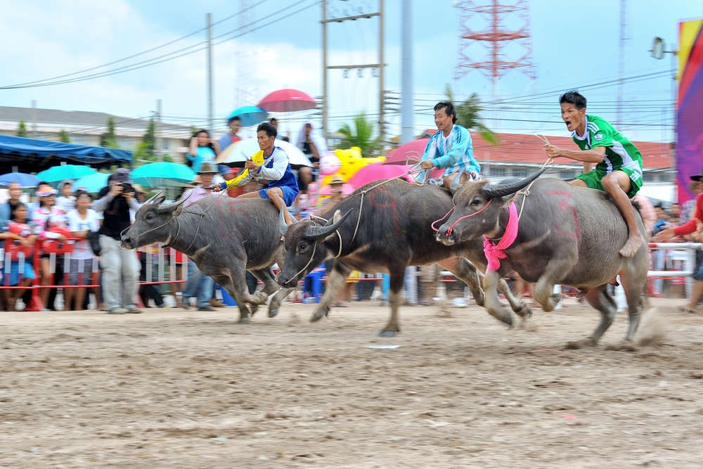 Buffalo Racing Festival in Wing Kwai