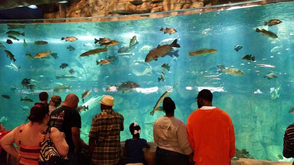 Aquarium & Fish Feeding Memphis Pyramid