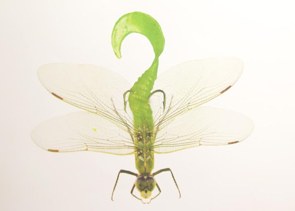 Dragonfly Hula Grub