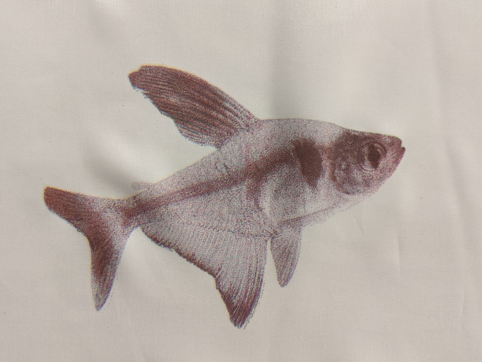 Black Phantom Tetra in Silk
