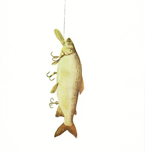 Fish Luring #2 v.II