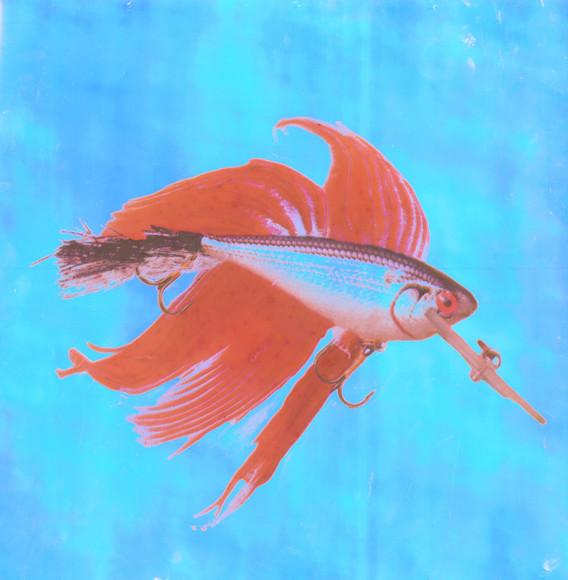 Red Rapala in Blue Sheen