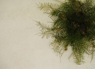 sea star fern wreath  at BB