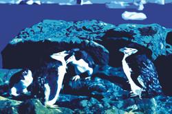 Пингвины.О.Ватерлоо. А.Новиков