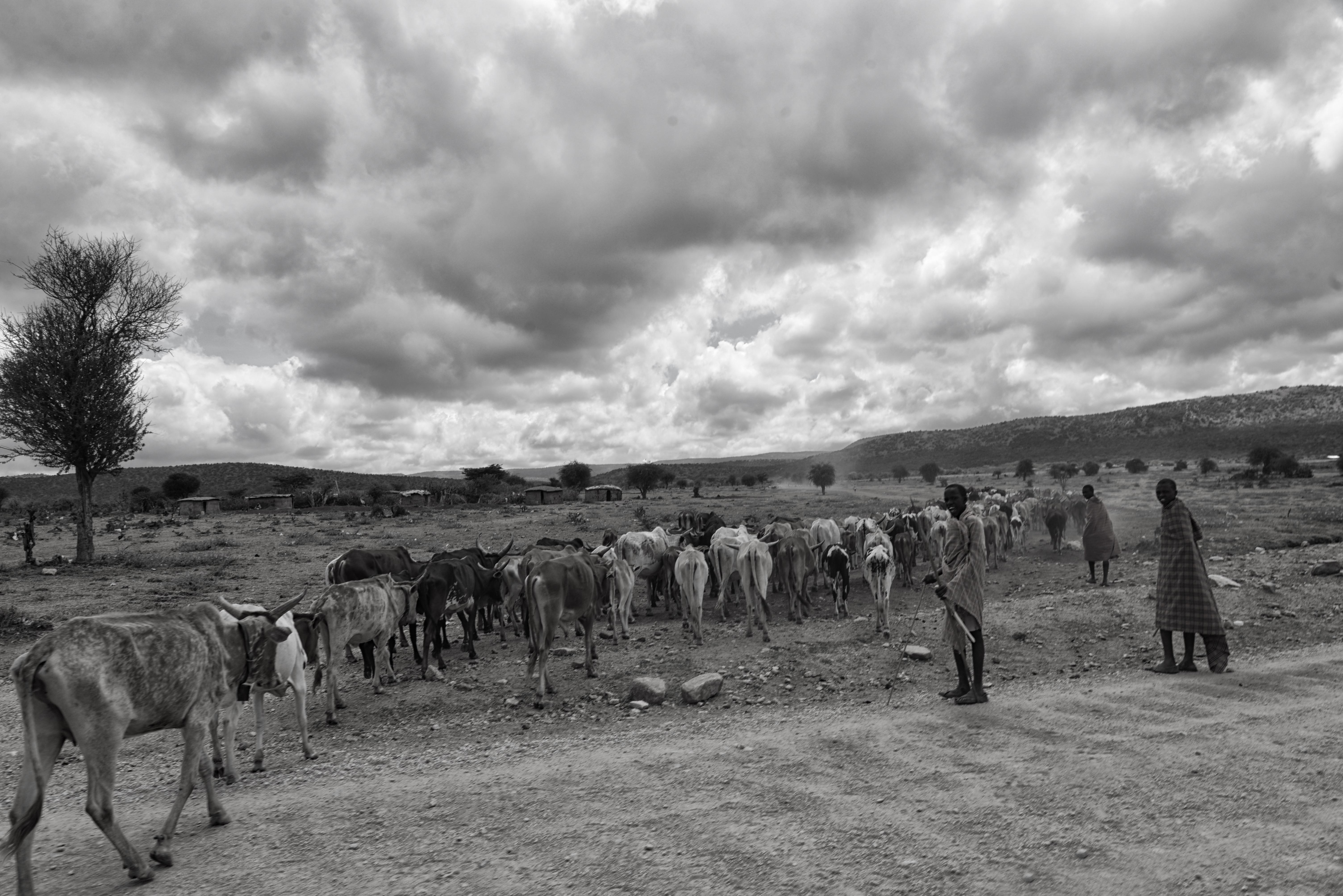 Масай Мара - Кения - ноябрь 2013