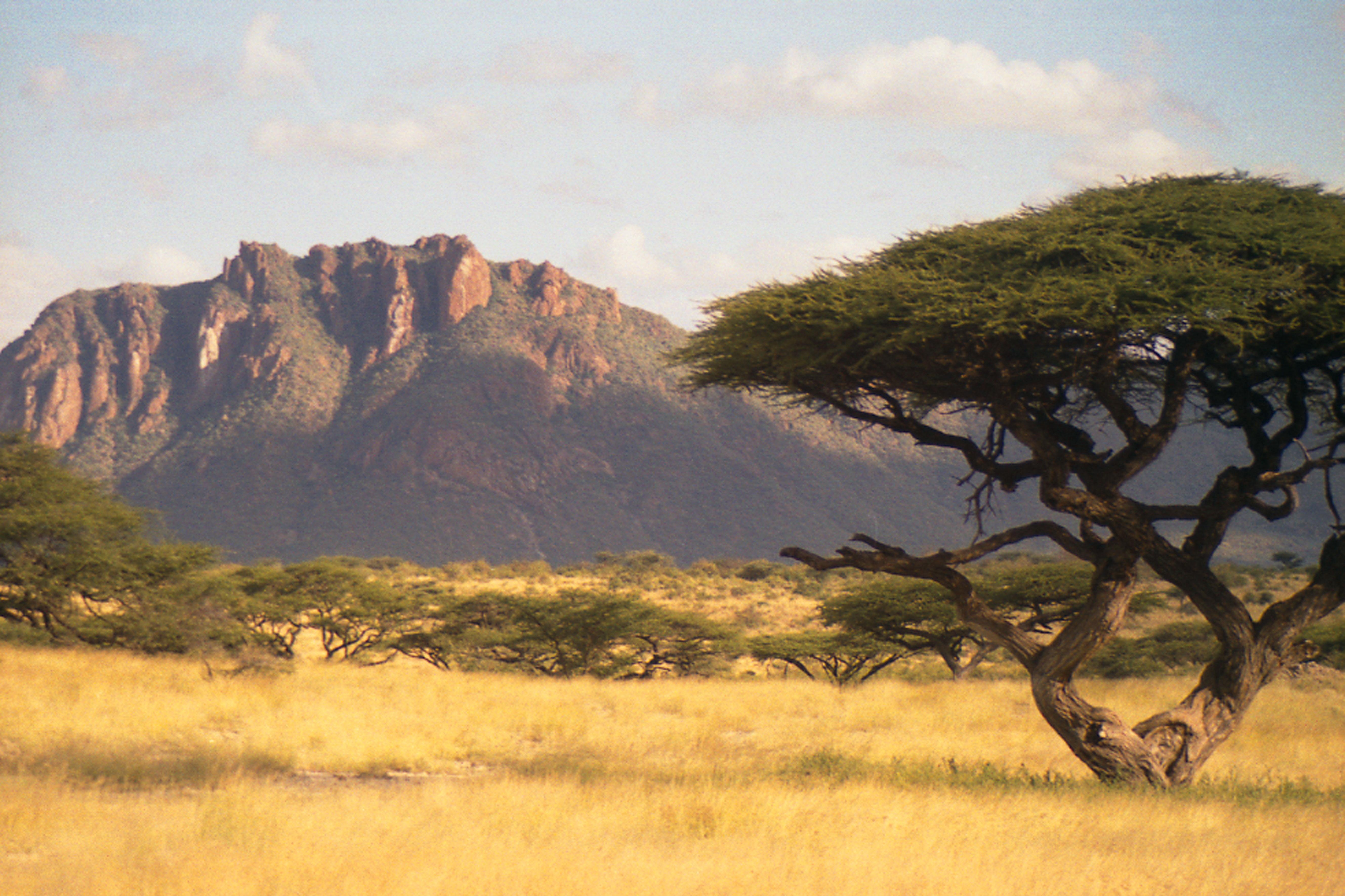 Кения. 2001