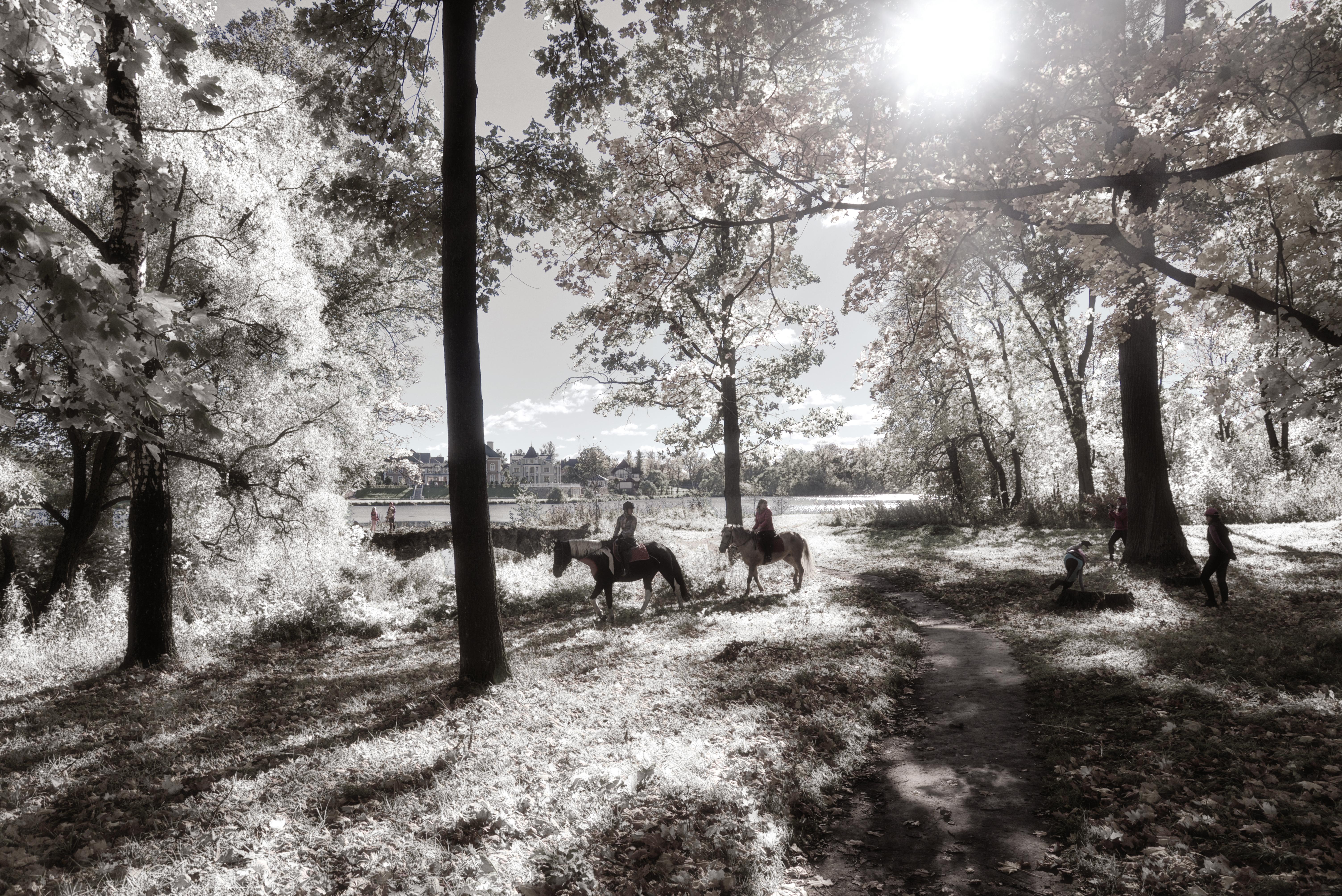 Стрельна -  октябрь 2016