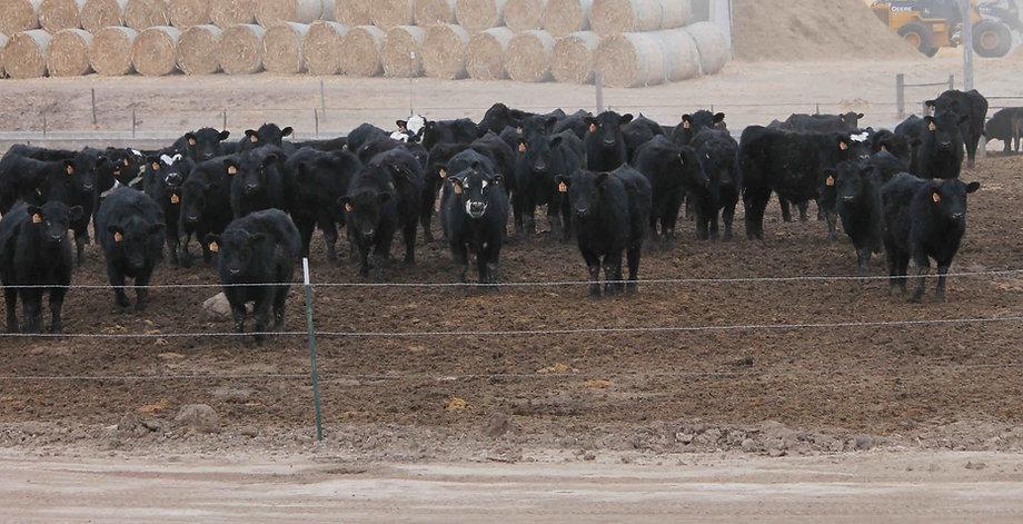 Custom cattle feeder in Nebraska | Burwell Feeders LLC