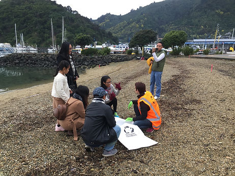 A group of people cleaning up rubbish on the Picton foreshore